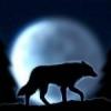 AlphaWerewolf